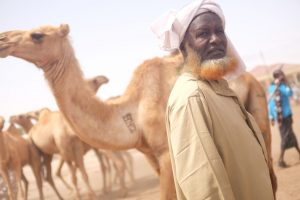 at the camel market on a Somaliland tour