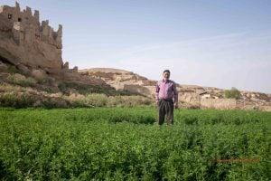 Iranian farmer
